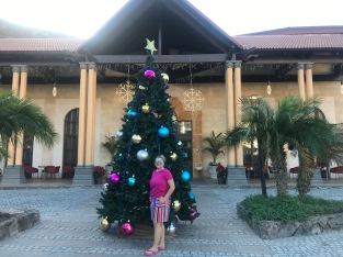 HOTEL TREE OUTSIDE